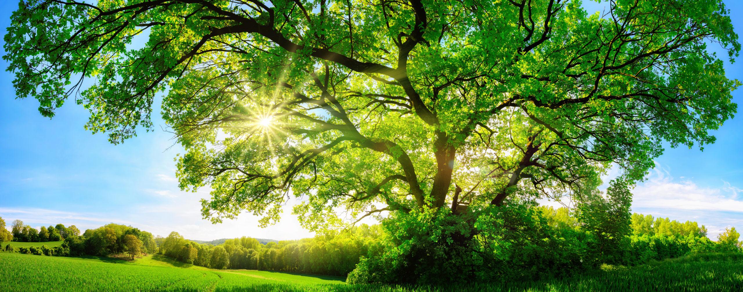 l'arbre de vie, brunie, psychanalyste